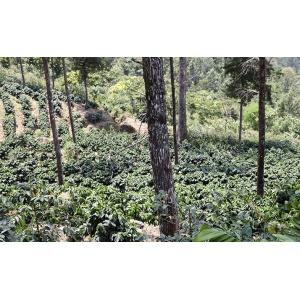 Guatemala El Rincon Coffeebeans 250G Cafés Trottet