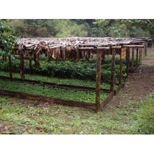 Equateur Pichincha Las Tolas Estate Lave 250Gr