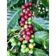 Cafés Trottet Costa Rica Caturra Kaffeebohnen 250G