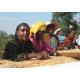 Capsules Ethiopie 10S