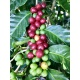 Costa Rica Caturra Gold Red Honey 250G