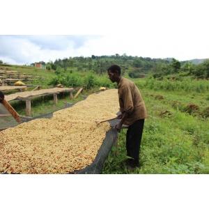 Coffeebeans Burundi Rugori Kirezi Washed 250G Cafés Trottet
