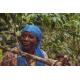 Cafés Trottet Rwanda Myshonyi Isimbi Lavé 250G