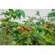 Cafés Trottet Coffeebeans Sable Farms Washed 250G Cafés Trottet